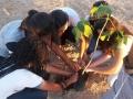 Mutirão faz plantio de mudas na orla de Petrolina, PE (4.12).