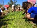 Atividade Horta Agroecológica. Sobradinho-BA, São Raimundo Nonato-PI, Santa Maria da Boa Vista-PE. 01/10/2019-14/10/2019.