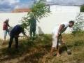 Atividades de Arborização. Escola Luzinete de Oliveira. Juazeiro-BA. 24/05/2019