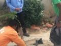 Arborização em Palmares - Juazeiro - ocorreu no dia 02.08 e contou com oito pessoas.