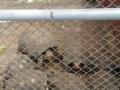 Parque Zoobotânico da Caatinga vira atração eco-didática para estudantes. Petrolina, PE (25/10).