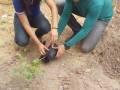 Atividades de Arborização. Escola Helena Celestino. Juazeiro-BA. 07-10-2016