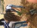Plantio de 11 paineiras para evitar sol causticante. Petrolina, PE (01/12).