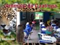 Preservação da biodiversidade da fauna da Caatinga