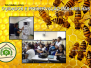 Preservação e cuidados com as abelhas