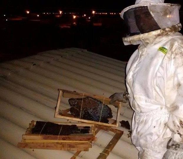 Resgate, Cuidados e preservação das abelhas. Sede do IRPAA. Juazeiro-BA. 28/05/2017.