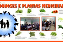 Saúde Ambiental: Zoonoses e Plantas Medicinais