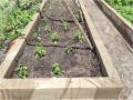 Atividade Horta Agroecológica. Senhor do Bonfim-BA. Dezembro de 2019 a Março de 2020.