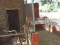 Visita técnica ao Parque Zoobotânico. Escola Marechal Antonio Alves Filho. Petrolina-PE. 28-07-2016. Foto - parquezoobotanicodacaatinga.blogspot