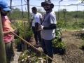 Plantação de novas mudas no viveiro
