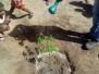 Vivenciando a Educação Ambiental através de Arborização