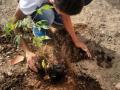 Atividades de Arborização. Escola Helena Celestino. Juazeiro-BA. 26/07/2017.