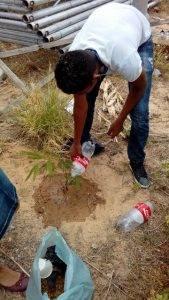 Arborização de escola