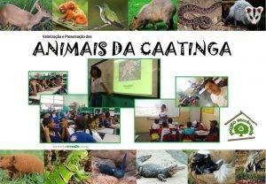 Animais da Caatinga Capa