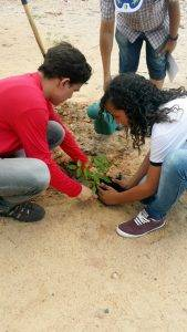 Atividades de Arborização. Escola Adelina Almeida. Petrolina-PE. 07/12/2016.