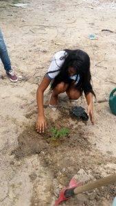 Arborização PE BA 95