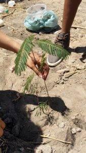 Arborização PE BA 45