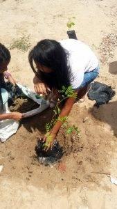 Arborização PE BA 74