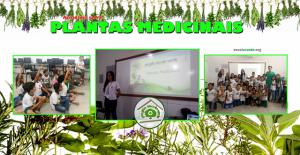 Plantas Medicinais 01